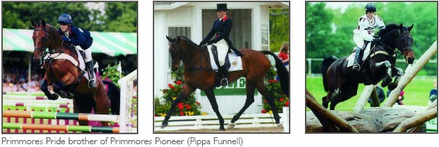 Primmore's Pride, brother of Primmore's Pioneer with Pippa Funnell
