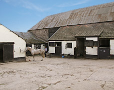 Some of the stables